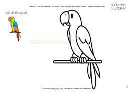 coloring page parrot color parrot picture