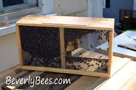 Top Bar Beehive Plans Free How To Install Package Bees In A Top Bar Hive Beverly Bees