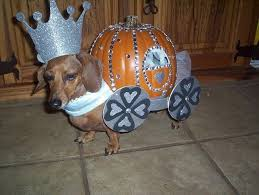 Halloween Costumes Dachshunds 19 Costumes Prove Dachshunds Win Halloween