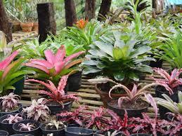 ornamental plants top nursery