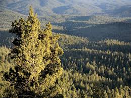 Oregon Forest images Region 6 regional overview jpg