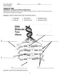 Dna Structure And Replication Worksheet Key Dna Worksheet