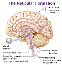 Anatomy Of The Brain And Functions The Partsof Thebrain On Emaze