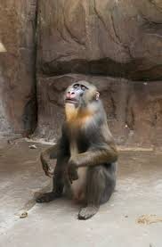 Baboon Meme - brother went to the zoo and caught this baboon having an epiphany