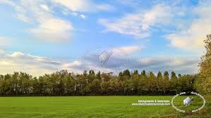 country landscape with trees background 21031