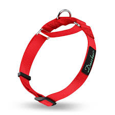 leashes harnesses collars tags when dogs talk