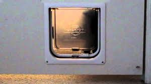 Interior Pet Door For Cats Cat Learning To Use Cat Door Petsafe Interior Pet Door Youtube