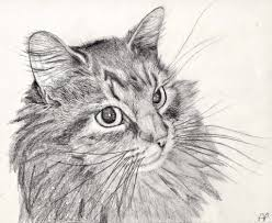 drawn cat pencil drawn pencil and in color drawn cat pencil drawn