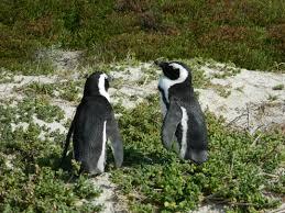Garda Bad Hersfeld Reisebüro Solatour Elefanten Pinguine U0026 Die Schönste Stadt Der