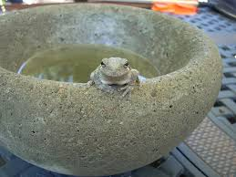 easy to make concrete bowls and planters 11 steps with pictures