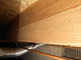 musty odor in crawl space reading a lot getting confused
