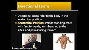 Anatomy And Physiology Introduction To The Human Body Introduction To Anatomy And Physiology Youtube
