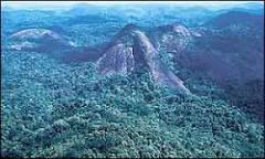 Banco Mundial e FHC anunciarão parceria para a Amazônia | BBC ...