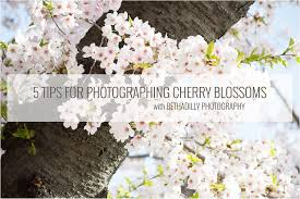 5 tips for photographing cherry blossoms bethadilly
