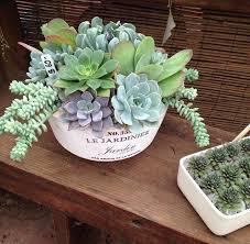 succulent arrangements succulent arrangements arrangements ojai blooms flowers