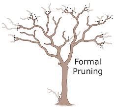 pruning crepe myrtle trees gardening how