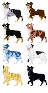 t shirt australian shepherd australian shepherd adoptables by sonyathough on deviantart