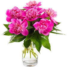 peonies delivery best seller flowers delivery germany fa103662 pink