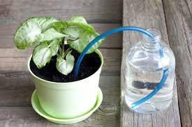 self watering plants how does a self watering planter work hunker