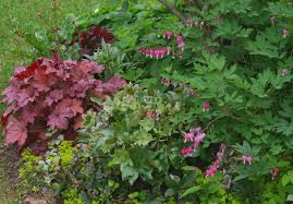 gardening plants that grow in shade and shady garden the old