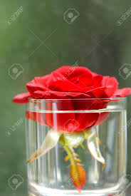flower of red roses in glass with water stock photo picture and