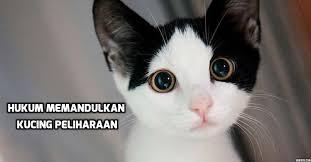 hukum memandulkan kucing betul ke haram memandulkan kucing peliharaan anda lenteraemas com
