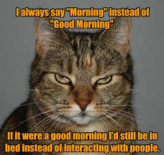 Good Morning Meme - i can has cheezburger good morning funny animals online