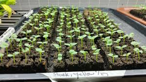 faq seed starting with soil blocking the gardener u0027s workshop