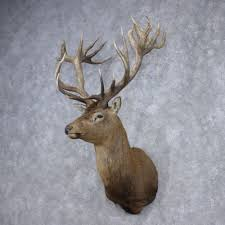 Stag Head Home Decor Red Stag Mount For Sale 12375 The Taxidermy Store