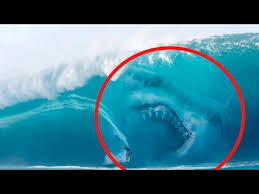 biggest megalodon shark 5 megalodons caught on camera spotted in real life youtube