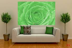mural green rose with water drops photo mural green rose with water drops