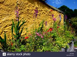 yellow painted wall cottage garden traditional herbaceous