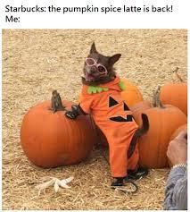 Pumpkin Meme - 18 memes for the pumpkin spice loving basic white girls