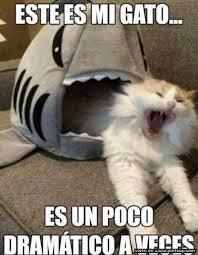 Gato Meme - es mi gato es un poco dram磧tico a veces