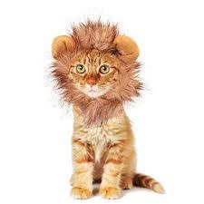 Kitten Halloween Costumes Pet 40 Cats Costumes Images Animals Animal