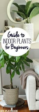 floor plants home decor 10 places to put indoor plants plants gardens and house