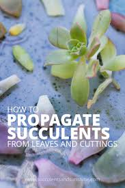 Succulents That Don T Need Light How To Propagate Succulents From Leaves And Cuttings Succulents