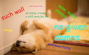 The Doge Meme - contest entry maru the doge by darkdragon770 on deviantart