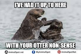 Otter Memes - otter memes pictures png