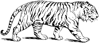 tiger color page coloring page for kids