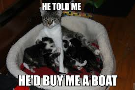 Cat Meme Boat - rethinking her life choices or maybe imgur