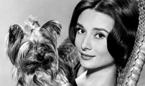 classic hollywood 17 classic hollywood stars who were just as dog crazy as you