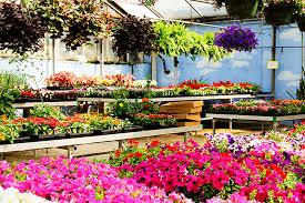 Robbins Flowers - robben florist u0026 garden center flowers gardening supplies