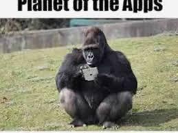 Funny Gorilla Meme - the most funny gorilla s in the world 2015 gorilla ape meme youtube
