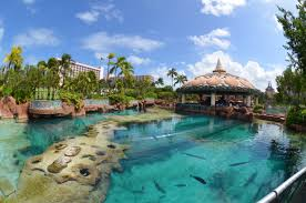 the dig aquarium atlantis resort bahamas youtube