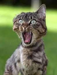 Shock Meme - funny images photos of shocked animals