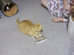 Cardboard Scratchers For Cats Bld In Mt Living A Simple Life In This Interconnected World The