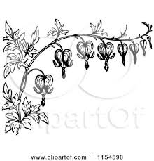 vine clipart bleeding heart pencil and in color vine clipart