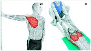 What Muscle Do Bench Press Work 34 Pictures That Show You Exactly What Muscles You U0027re Stretching
