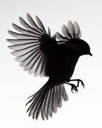 blackbird of harkers drop 72 00 via etsy art on my sleeve
